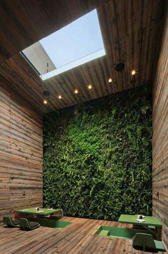 Vertical indoor garden with window in the ceiling. Suitable for the bathroom.