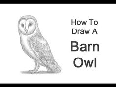 ▶ How to Draw a Barn Owl - YouTube