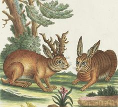 Two Hares Antique Print 1752 | Content in a Cottage