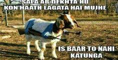 Funny Bakra Eid Jokes