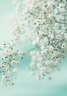 Baby's breath but just barely.