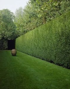 Garden Screening Ideas - Screening could be both ornamental and practical. From a well-placed plant to upkeep free secure fencing, below are some imaginative garden screening ideas. Boxwood Hedge, Ficus Hedge, Bamboo Hedge, Cedar Hedge, Boxwood Garden, Landscape Architecture, Landscape Design, Garden Hedges, Small Gardens