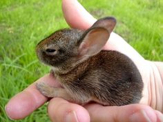 I wouldn't mind a few of these little guys in my garden