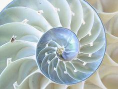 photo of natulus shells  | Labels: cephalopod , invertebrates , nautilus , new england aquarium
