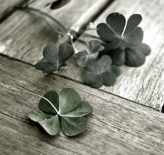 who's looking over, the 4 leaf clover?