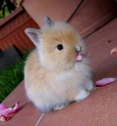Bunny nibbling on pink flower petals.
