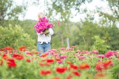 #farmerflorist #flowerfarm  Harvesting one of my favorite Zinnias, Uproar Rose. At Dahlia May Flower Farm Image by @AshleySlessor