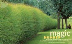 Grass magic
