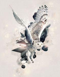 Owl Bird, Bird Art, Lechuza Tattoo, Owl Tat, Owl Artwork, Zodiac Tattoos, Owl Photos, Beautiful Owl, Funky Art