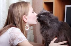 15 Sure-Fire Ways to Bond with Your Cat | petMD