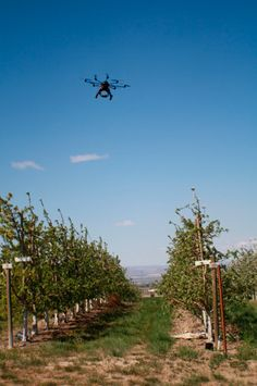 Peach Flower Monitoring Using Aerial Multispectral Imaging #drones #UAVs #MachineVision
