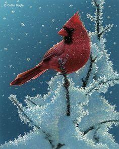 Beautiful Wildlife Paintings by Collin Bogle (20 pics)