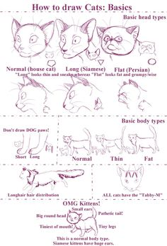 How to draw Cats by Stock-Heil on @DeviantArt