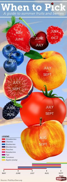 When to Pick A Guide to Summer Fruits and Berries #infographic #Summer #Fruits…                                                                                                                                                                                 More