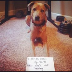 The Best of Dog Shaming - Part 16 (20 pics) | Mommy Has A Potty MouthMommy Has A Potty Mouth