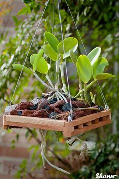 Garden Flowers - Annuals Or Perennials Questions About Using Lava Rock - Orchid Forum Orchid Care House Plants, Flower Garden, Plants, Garden, Succulents, Hanging Orchid, Plant Care, Flowers, Orchid Seeds
