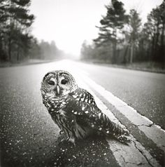 Owl, Big Thicket, Texas by Arthur Tress~ ♛