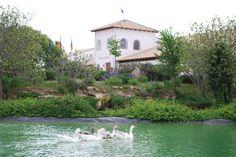 Bodega Pago de Tharsys. Requena. #rutadelvinoutielrequena #enoturismo Valencia, Wine Cellars, Paths, Cover Pages