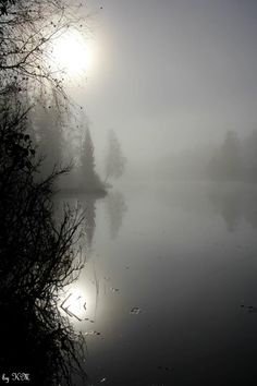 Misty morning - by Kari Meijers