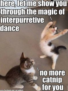 Cute Animals New Zealand and Cute Cats Doing Funny Things many Cute Cats And Kittens Pictures half Cute Kittens For Sale In London Funny Animal Images, Cute Animal Memes, Funny Animal Quotes, Animal Jokes, Cute Funny Animals, Cute Baby Animals, Hilarious Animal Memes, Cute Cat Memes, Funny Cat Pictures