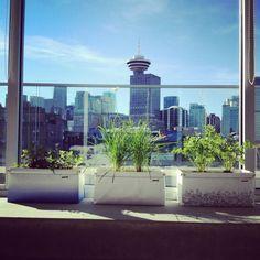 Nice view! Nice herbs!