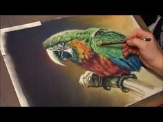 ▶ Fast drawing - Ara Macaw in soft pastels - YouTube - not really a tutorial but a wonderful drawing