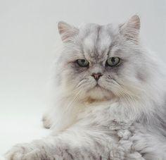 Solo Gatos