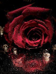 rosa y humedad