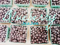 An old favorite. Dear Heart: [Weekend Snapshot] Blueberry Season