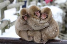 Pinned by: ☾OohmyJupiterr Cute Baby Animals, Animals And Pets, Funny Animals, Animal 2, Mundo Animal, Beautiful Creatures, Animals Beautiful, Photo Zen, Primates
