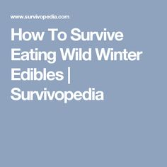 How To Survive Eating Wild Winter Edibles | Survivopedia