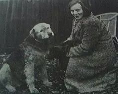 Marjory French was trapped in Purley London. A bomb destroyed her house. The first signs of rescue came when 2 paws were digging fast and furious at the rubble around the air raid shelter. Rescued by Chum, an Airedale Terrier. He excavated an opening large enough to get through, seized her by grabbing her dress in his jaws, and dragged her out. Our Dumb Friends' League (later became the Blue Cross) presented him with its special medal for canine bravery on January 25th 1941.