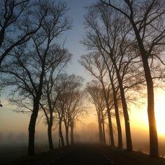 #100happydays, day 46. Ik moest even krabben, maar de mist en de vrieskou zorgden weer voor prachtige plaatjes vanochtend.