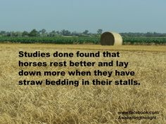 So how often to we supplement our horses to give them energy, to calm them down, to help with behaviors we deem as unwanted when really our horses just need REM sleep? This study is interesting...... Click and go to the article.