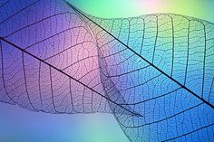 Shihya Kowatari is a Japanese photographer who captured the leaves and flowers under the lights of different colors. Her work transferred the macro world into a part of her beautiful life. Stunning Photography, Nature Photography, Photography Tips, Effects Photoshop, In Natura, Fotografia Macro, Under The Lights, Patterns In Nature, Leaf Patterns