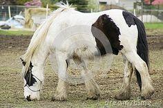 Photography of feeding farm horse