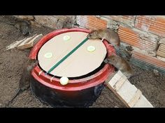 Easy Mouse Trap Using Deep Hole - Mouse/Rat Trap 2019 - YouTube Homemade Mouse Traps, Rat Traps, Pest Control, Mice, Deep, Make It Yourself, Youtube, Easy, Computer Mouse
