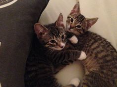 Kitten siblings