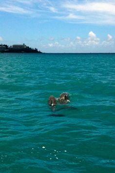 Dolphins in St. Thomas, USVI