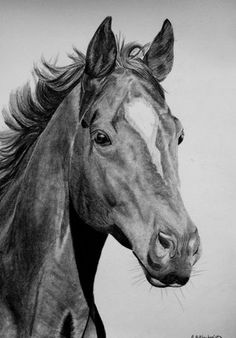 Zeichnungen - Famous Last Words Horse Pencil Drawing, Horse Drawings, Pencil Art Drawings, Realistic Drawings, Animal Drawings, Animal Sketches, Art Sketches, Tattoo Caballo, Lion Photography