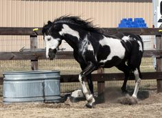 Cochise Stock 17 by GloomWriter on deviantART All The Pretty Horses, Beautiful Horses, Animals Beautiful, Horse Markings, American Paint Horse, Majestic Horse, White Horses, Horse Pictures, Horse Breeds