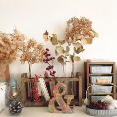 MAKIさんが投稿した画像です。他のMAKIさんの画像も見てませんか?|おすすめの観葉植物や花の名前、ガーデニング雑貨が見つかる!🍀GreenSnap(グリーンスナップ)