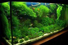 aquarium moss - Google Search