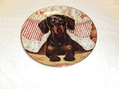 Dachshund Dog Plate Peek A Boo by Christopher Nick