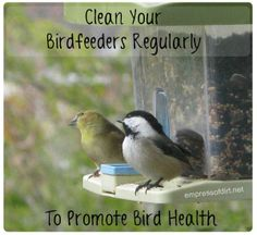 Clean Your Birdfeeders Regularly To Promote Bird Health