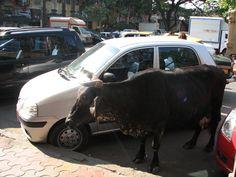 Street side Parking