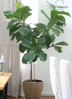 DIY Burlap Plant Pot Makeover