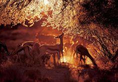 parque-de-kgalagadi-sudafrica---botsuana
