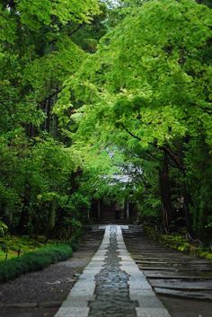 kamakura, raining