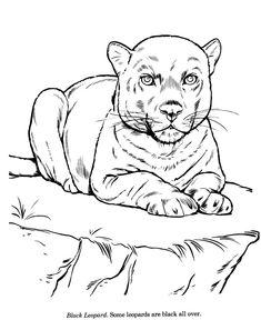 gunston coloring pages   고양이 컬러링북 도안/ 색칠공부 프린트 한 번도 고양이를 키운 적이 없어서 고양이는 컬러링북 도안으로 ...